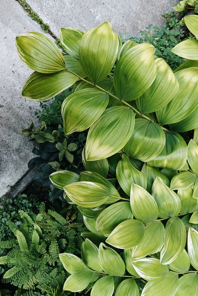 Enviromental Horticulture